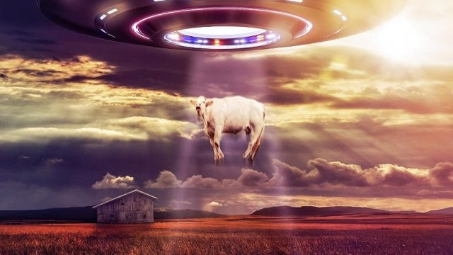 File:CattleMutilations2UFO-640x360.jpg