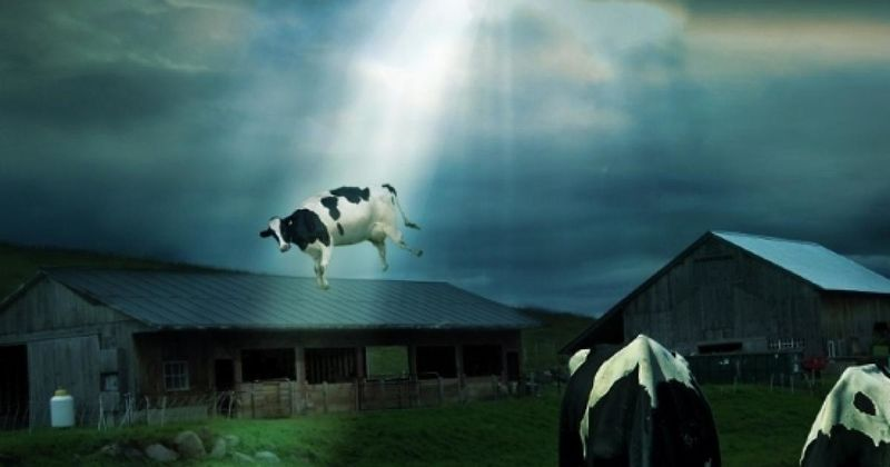 File:What-do-space-aliens-want-with-our-cows.jpg